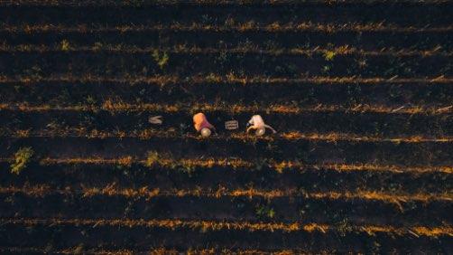 monte-soma-coltivazione-pomodorini-3